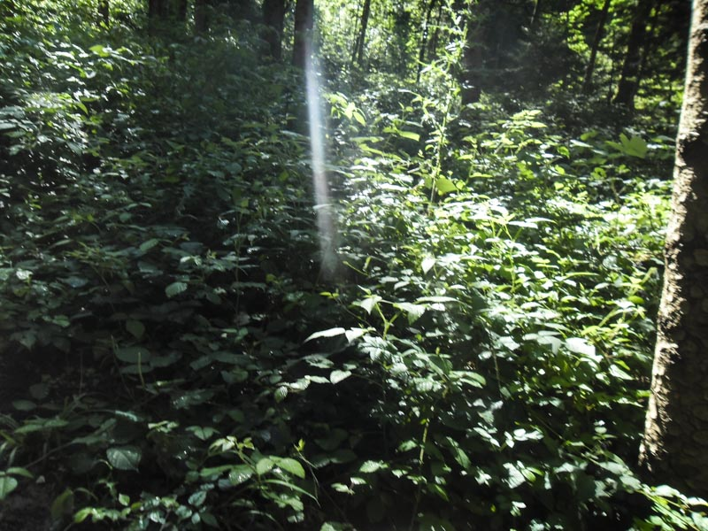 stage photo rayon de soleil dans les bois