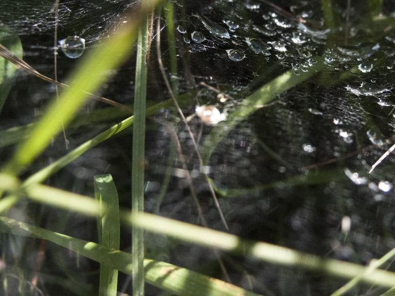 Stage photo détail toile d'araignée