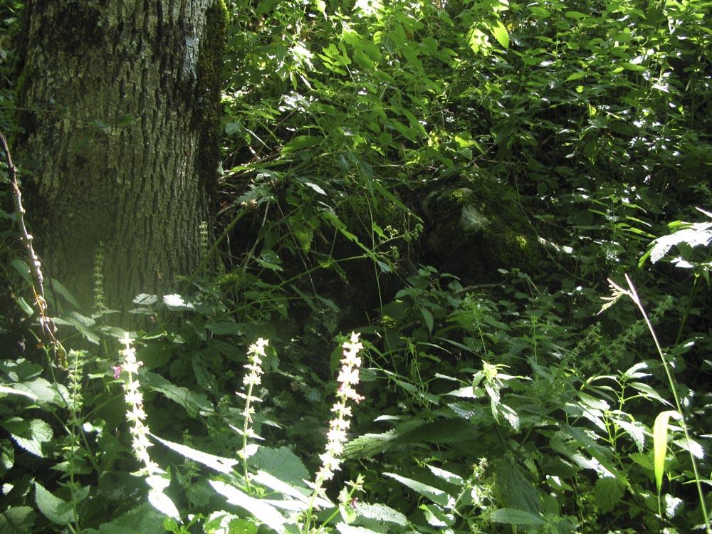 tronc sous bois